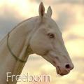 freeborn